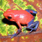 A Collection Of The Weirdest Frog Calls