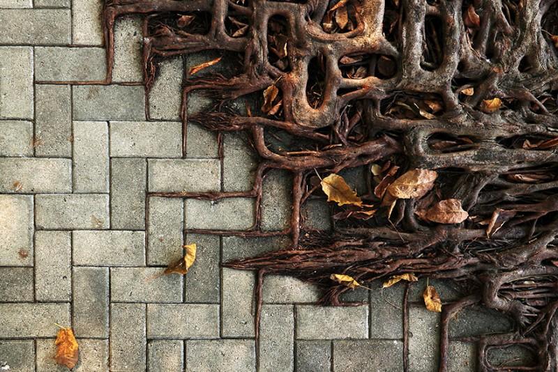Amazing Tree Roots 1
