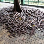 Tree Roots Being Tree Roots Like A Boss