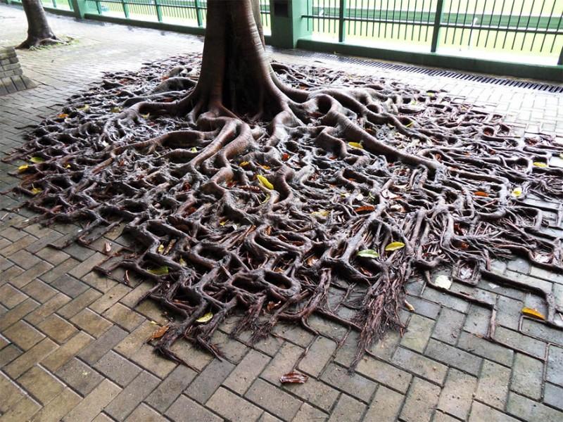 Amazing Tree Roots 11
