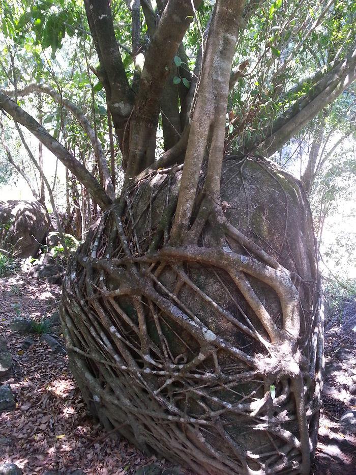 Amazing Tree Roots 13