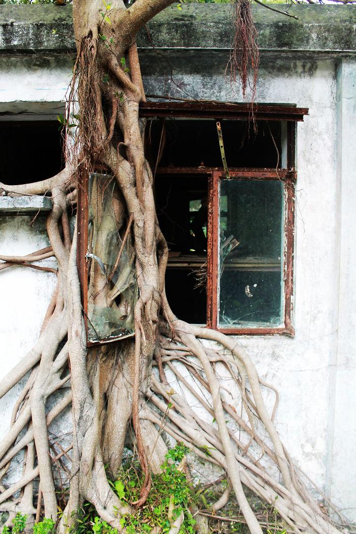 Amazing Tree Roots 14