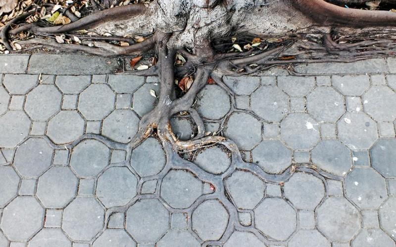 Amazing Tree Roots 2
