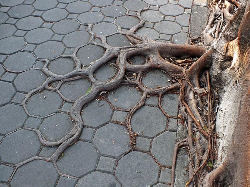 Amazing Tree Roots 3