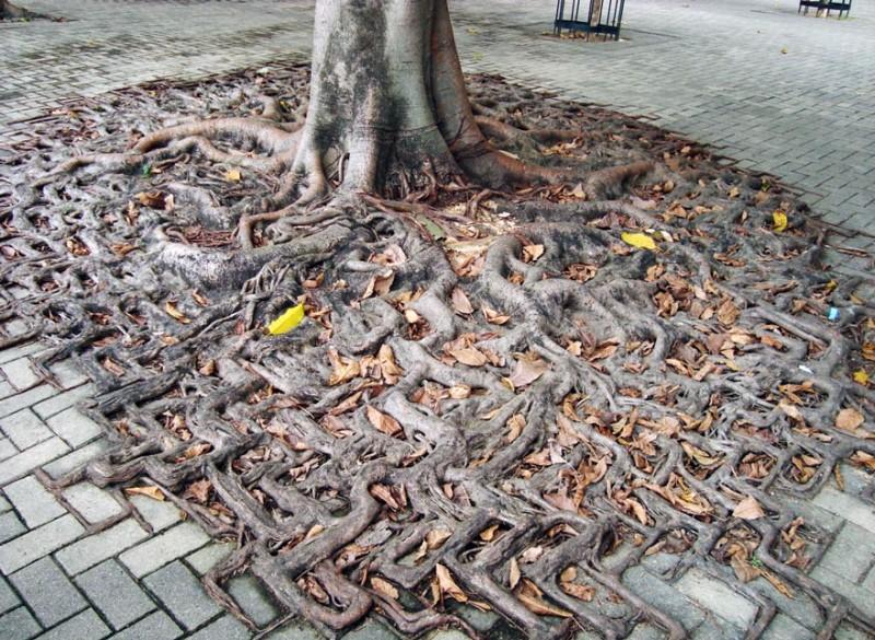 Amazing Tree Roots 4