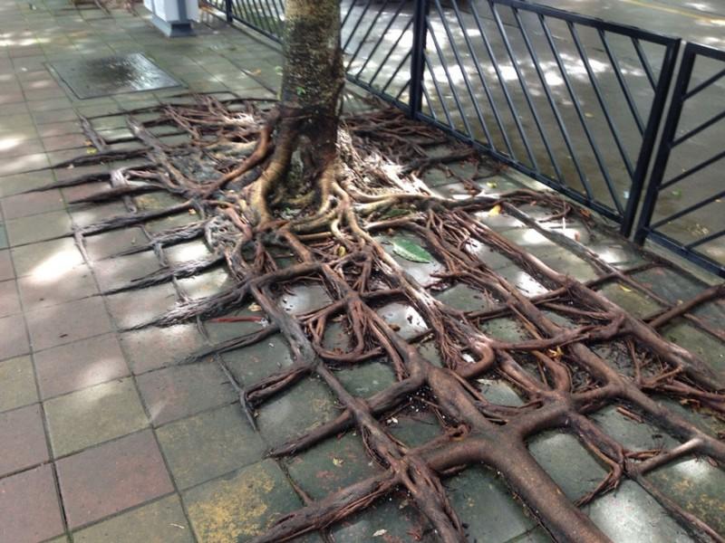 Amazing Tree Roots 5
