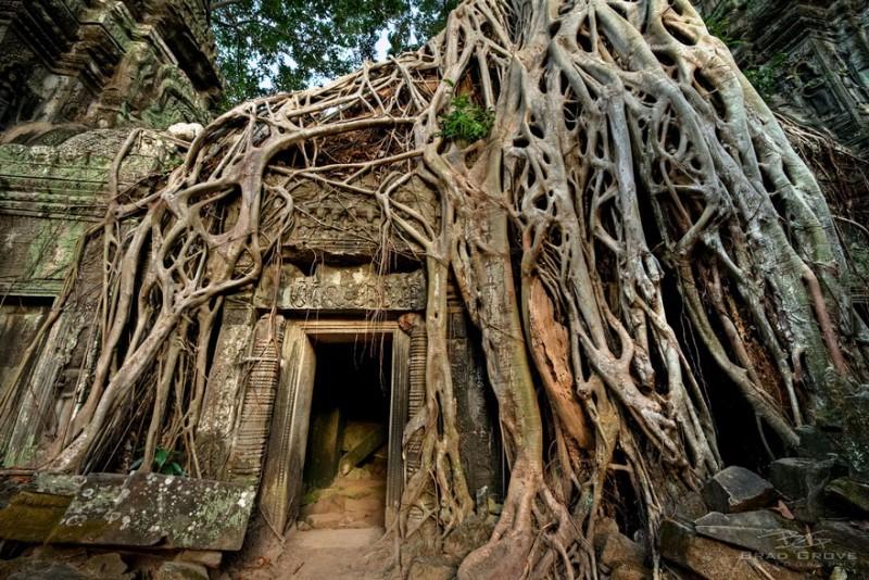 Amazing Tree Roots 6