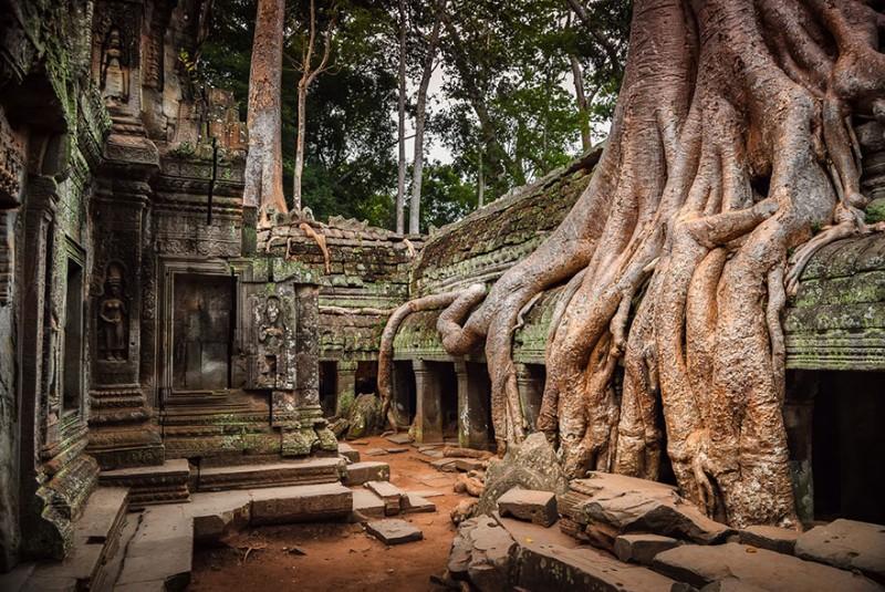 Amazing Tree Roots 7