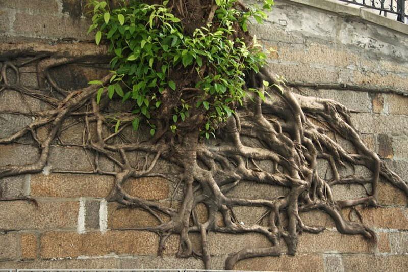 Amazing Tree Roots 8