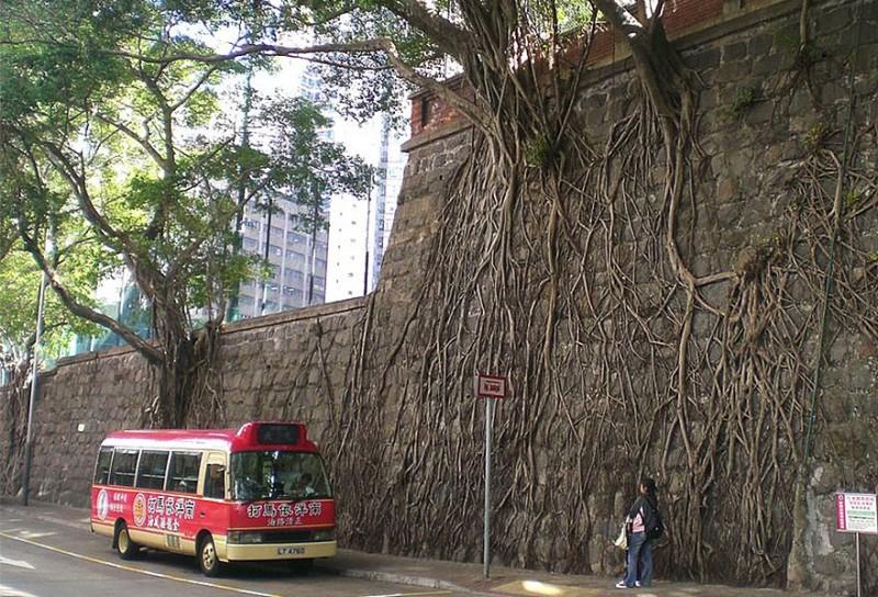 Amazing Tree Roots 9
