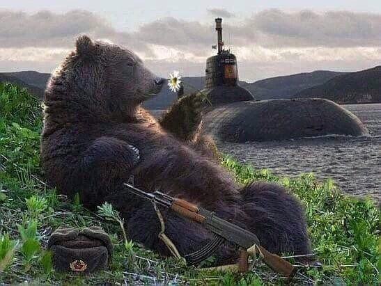 Awesome Photos From Russia - Bear Chilling