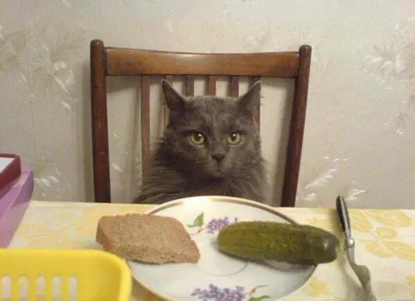 Awesome Photos From Russia - Cat Lunch