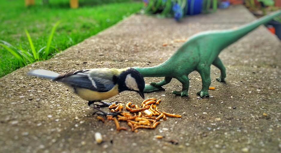 Great Tit And Dinosaur Having Lunch