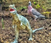 Real Birds Vs Toy Dinosaurs