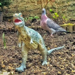 Real Birds Vs Toy Dinosaurs - Bird Brains
