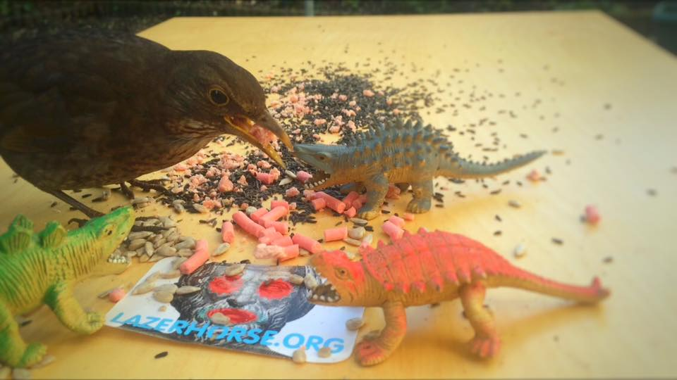 Real Birds Vs Toy Dinosaurs - Browny And Pals