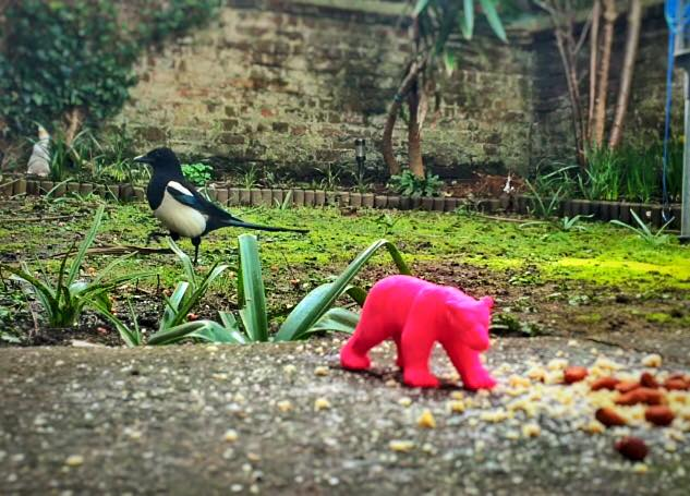 Real Birds Vs Toy Dinosaurs - Magpie And Polar Bear