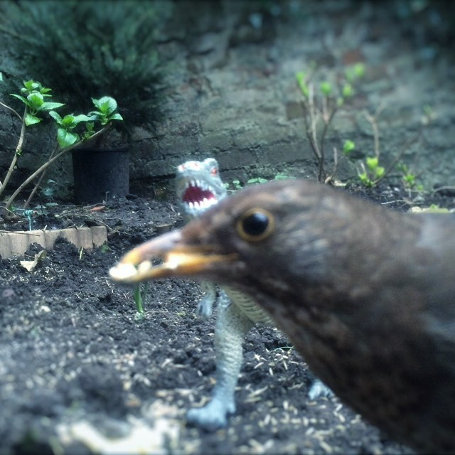 Real Birds Vs Toy Dinosaurs - Prehistoric Photobomb