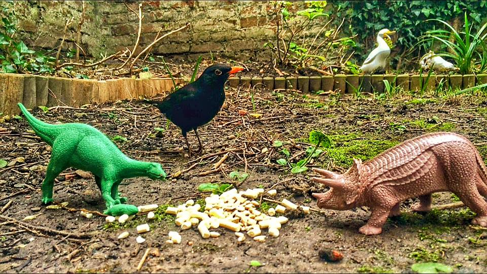 Real Birds Vs Toy Dinosaurs - Suspicion