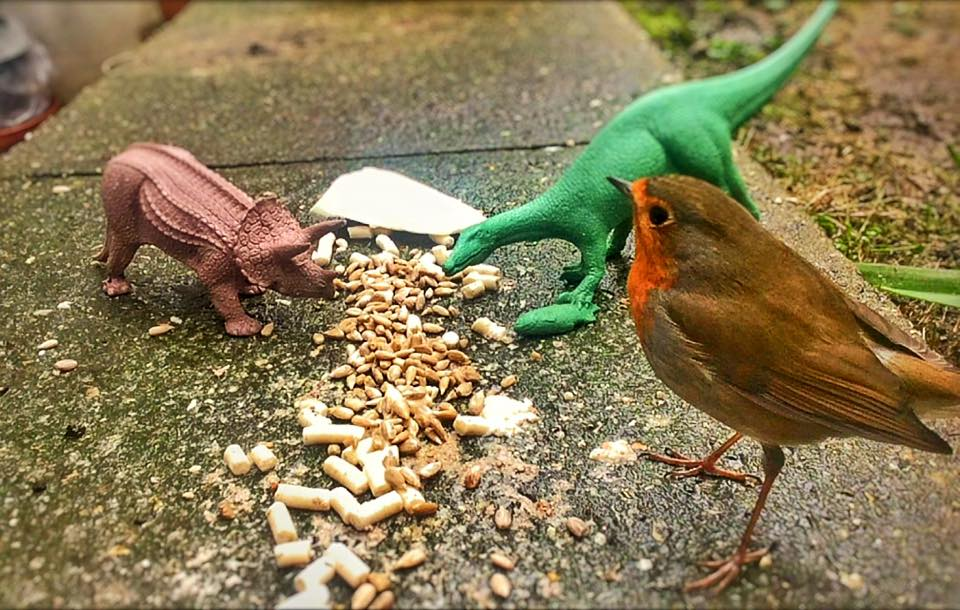 Real Birds Vs Toy Dinosaurs - Trio