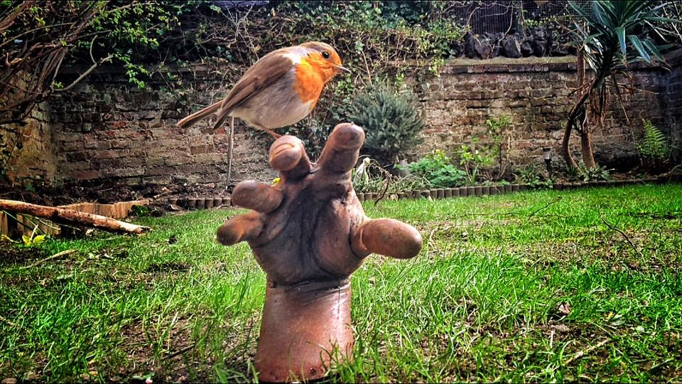 Robin Perched On Zombie Hand