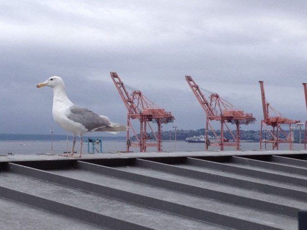 Funny Russian Photos - seagull pier