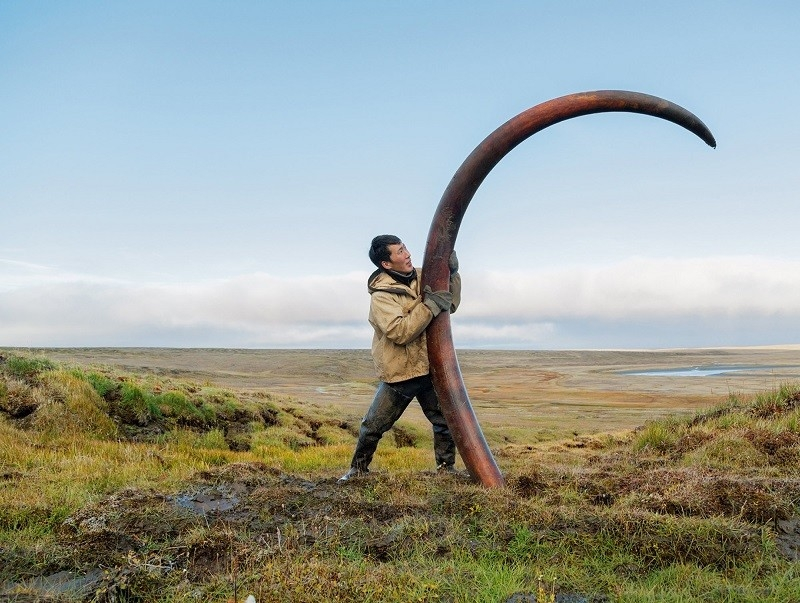 Mammoth Tusk Finder - Siberia