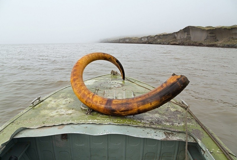 Mammoth Tusk Finder - Yakutsk
