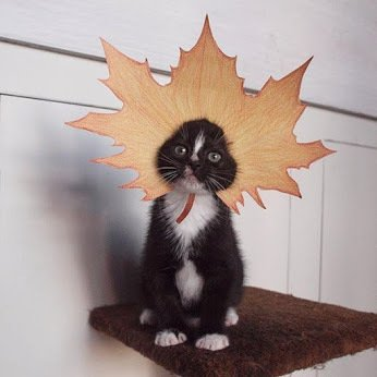 awesome-russia-lol-autumn-cat