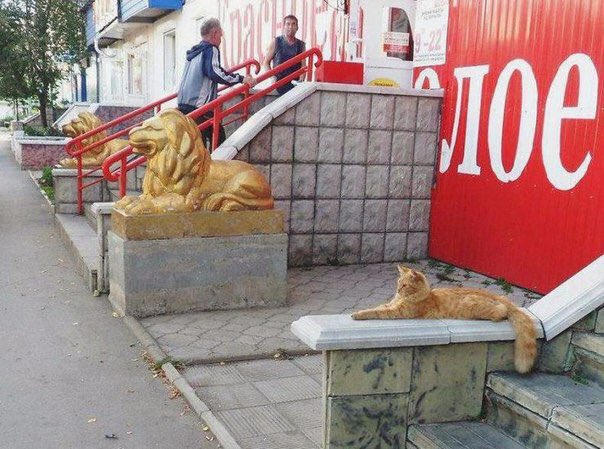 awesome-russia-lol-cat-and-lion
