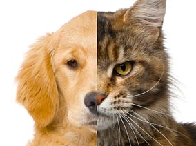 Dogs Or Cats? Which Is Most Popular?