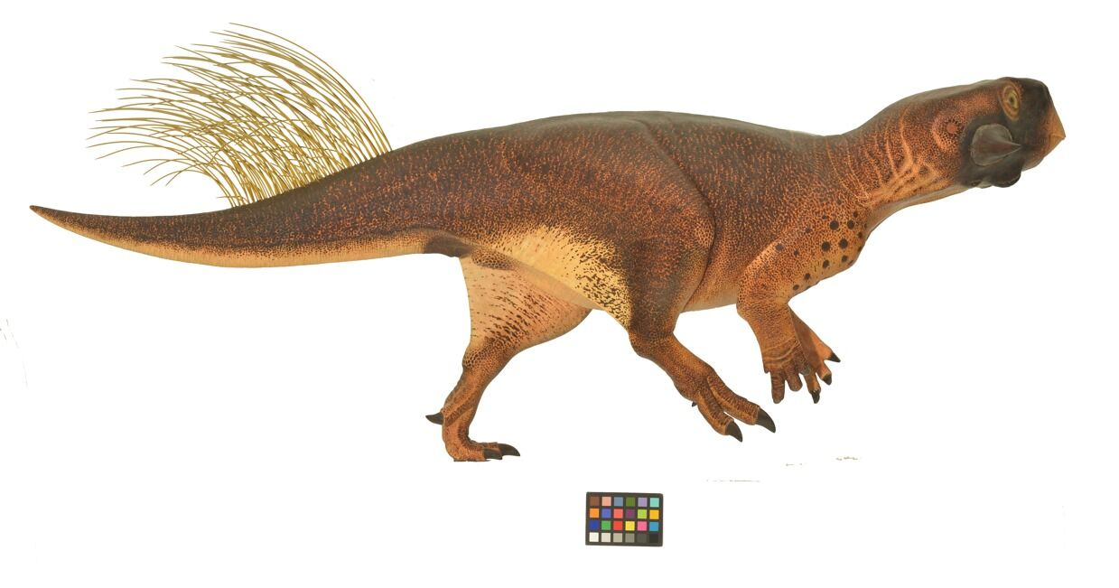 psittacosaurus-countershading-model-3