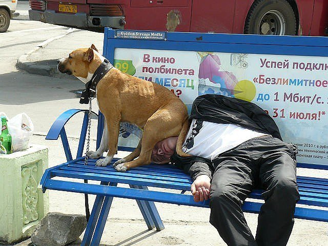 amazing-russia-dog-chill