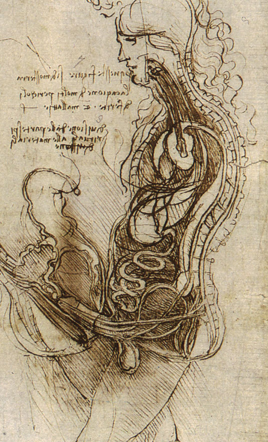 leonardo-da-vinci-sketches-coition