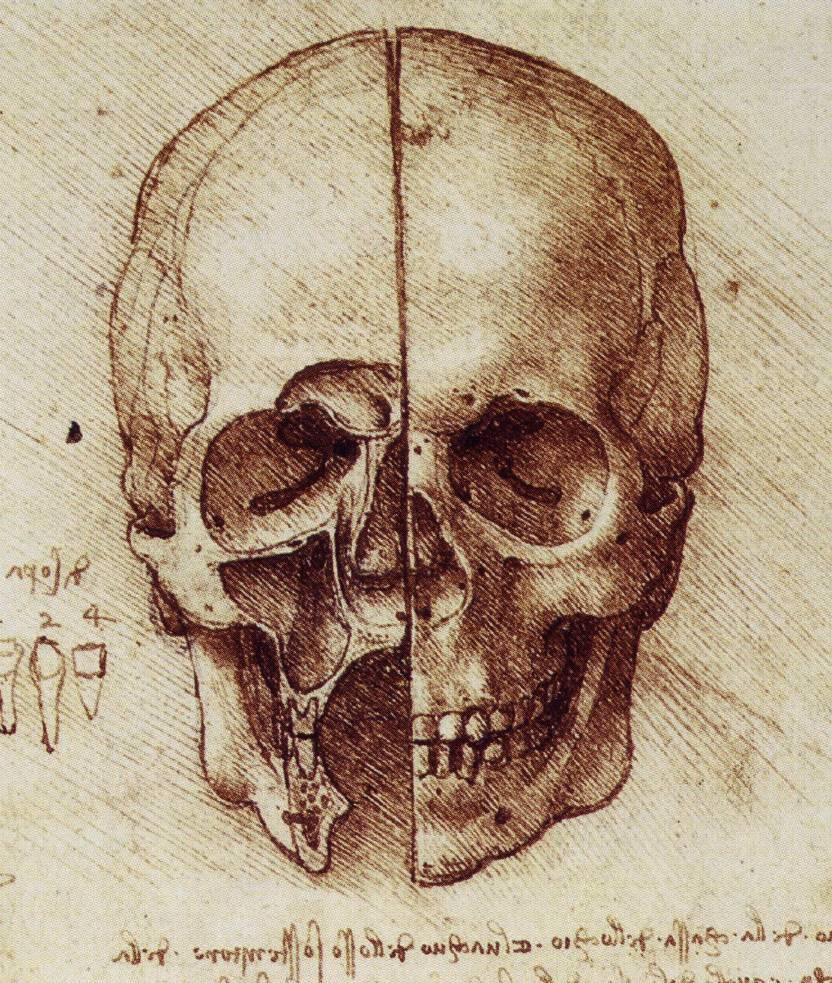 leonardo-da-vinci-sketches-skull