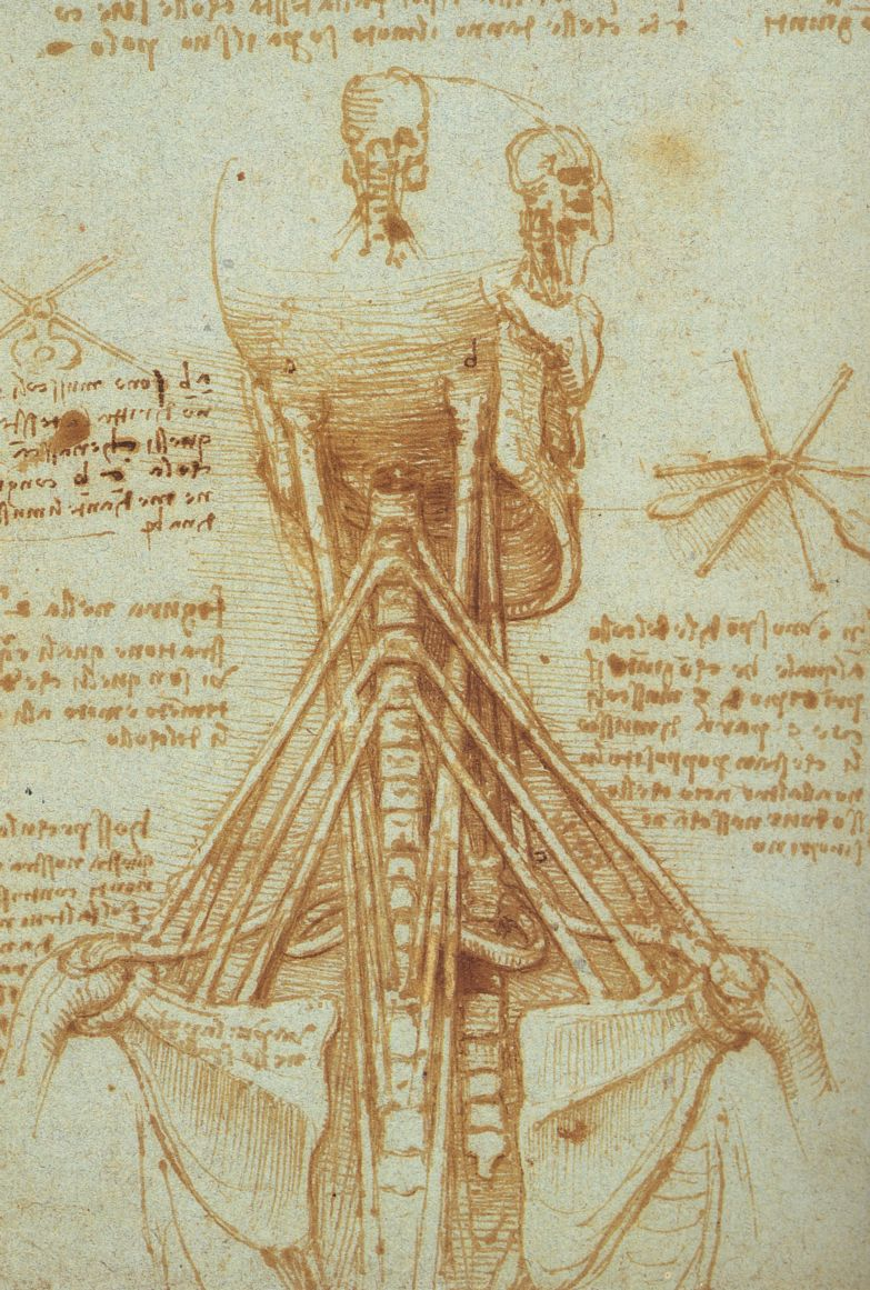 leonardo-da-vinci-sketches-anatomy-neck