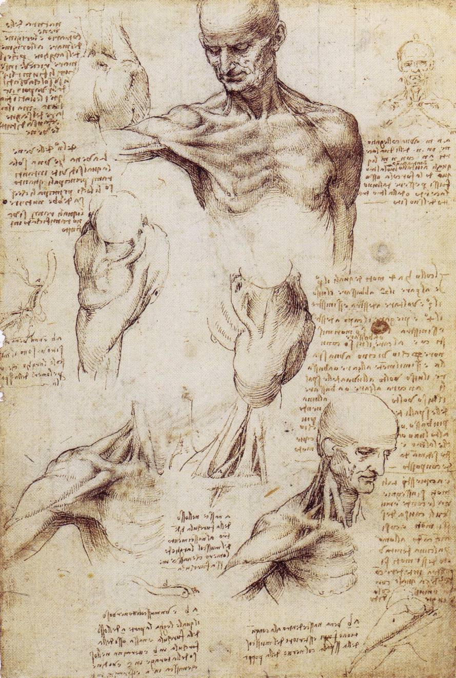 leonardo-da-vinci-sketches-shoulder-3