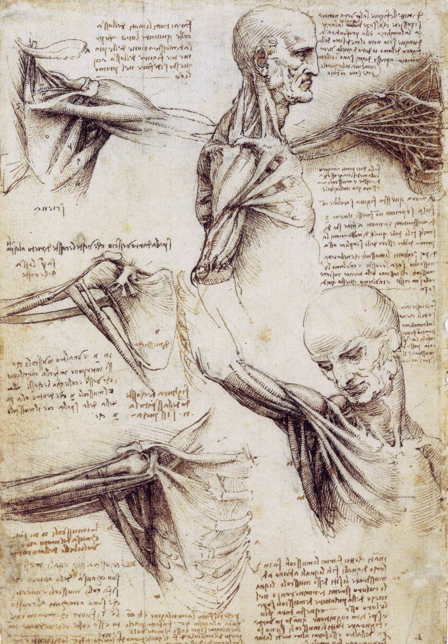 leonardo-da-vinci-sketches-shoulder-and-neck