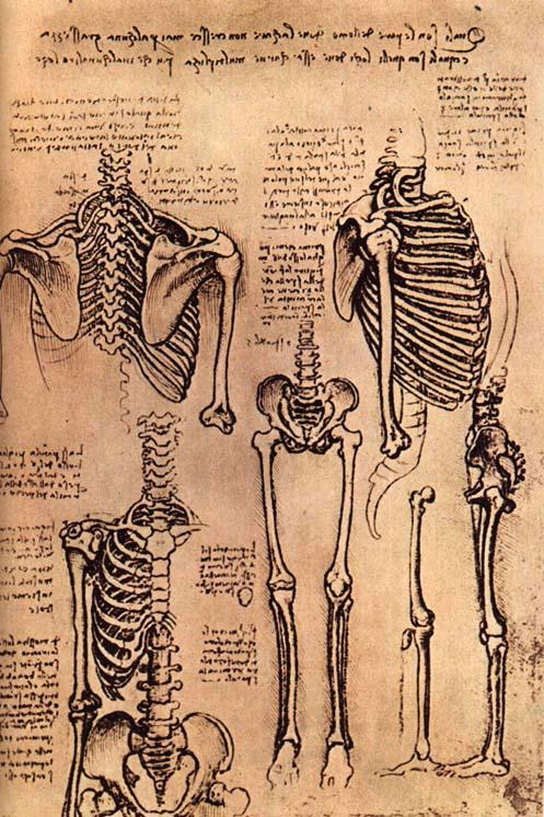 leonardo-da-vinci-sketches-skeleton