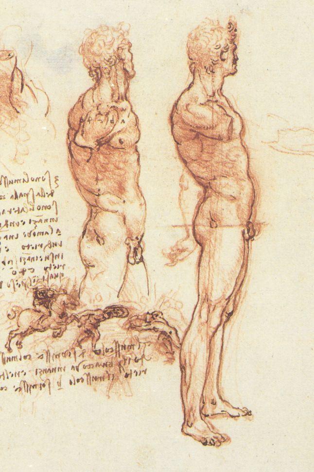 leonardo-da-vinci-sketches-study-pf-man