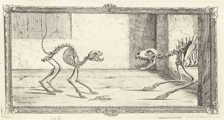 old-anatomy-drawings-cat-and-dog-skeleton