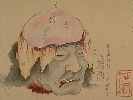 old-anatomy-drawings-china-1800-dura-mater