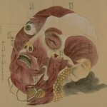 Old Anatomy Drawings: Beautifully Strange