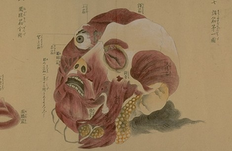 old-anatomy-drawings-china-1800-head
