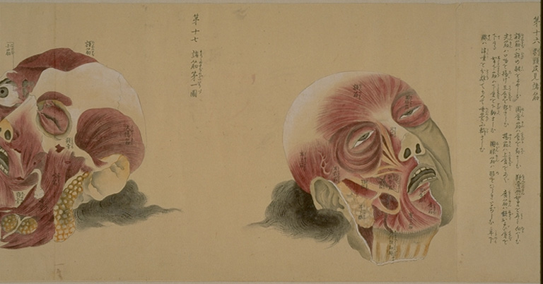 old-anatomy-drawings-china-1800-multi
