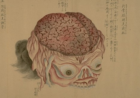old-anatomy-drawings-china-1800-skull