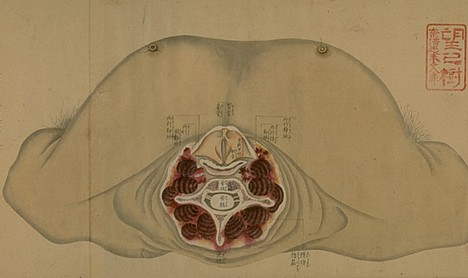 old-anatomy-drawings-china-1800