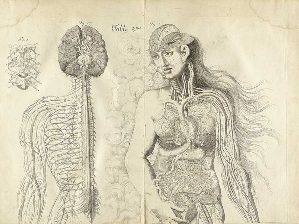 old-anatomy-drawings-dissected-woman