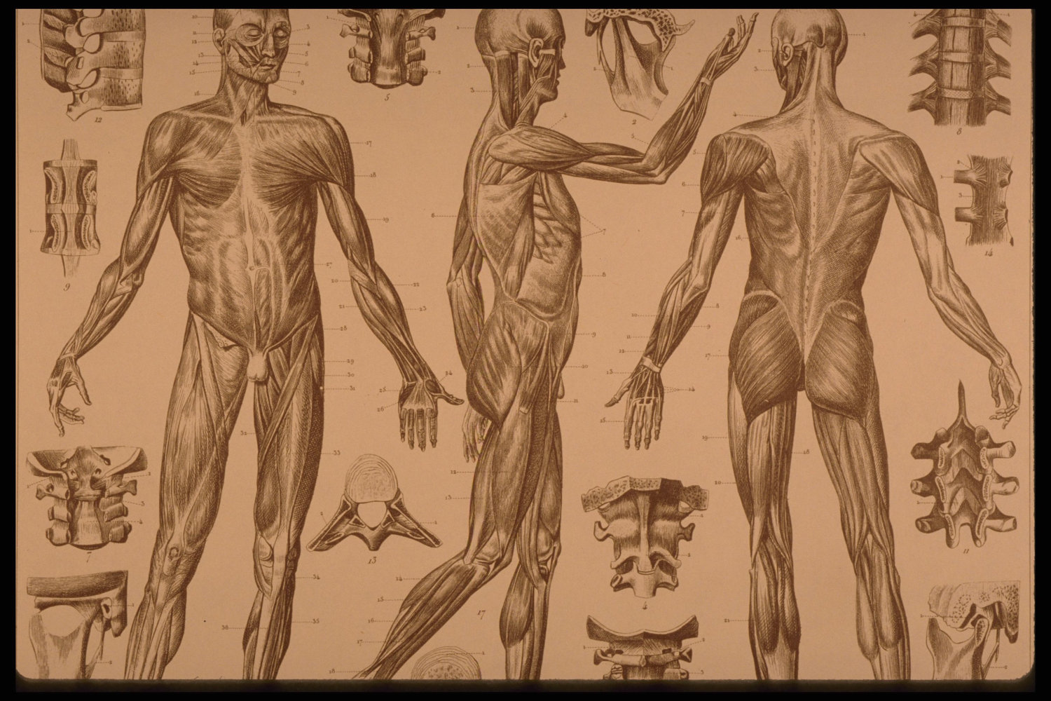 old-anatomy-drawings-group-and-study