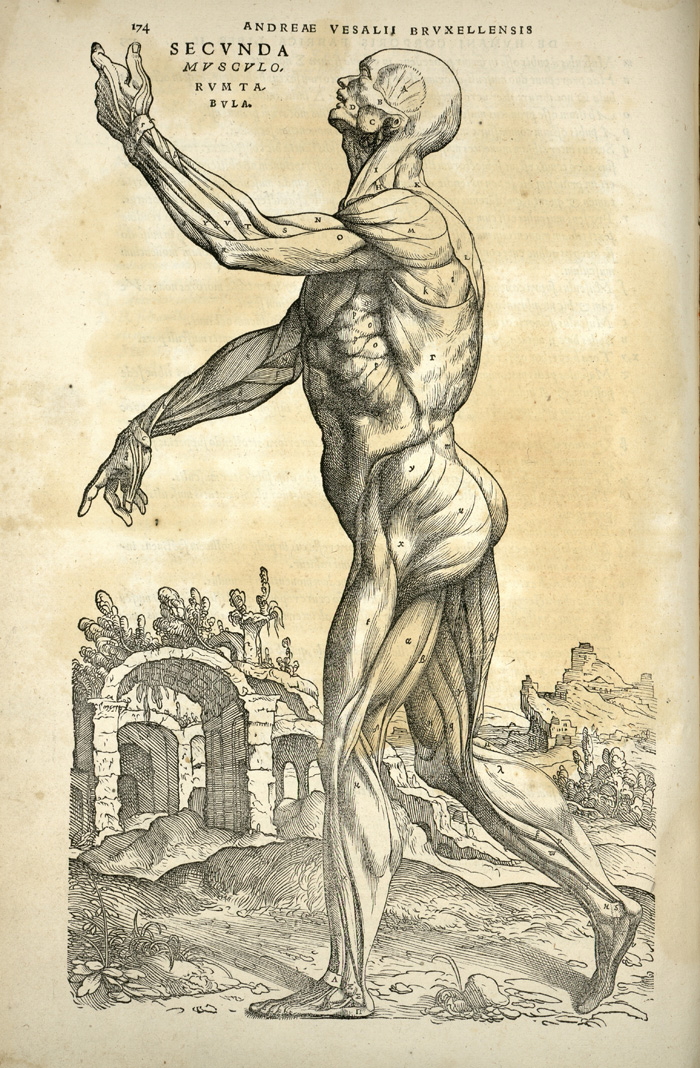 old-anatomy-drawings-musculature